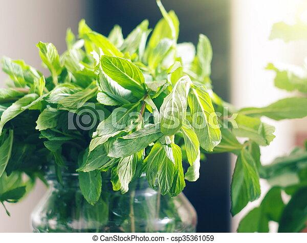folhas, hortelã, luz solar - csp35361059