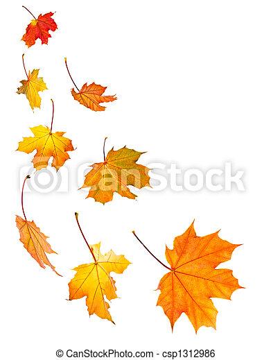 folhas, maple, fundo, outono - csp1312986