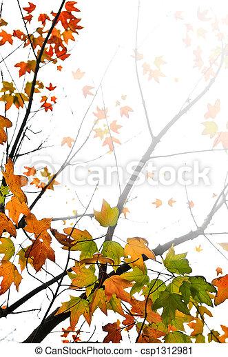 folhas, maple, fundo, outono - csp1312981