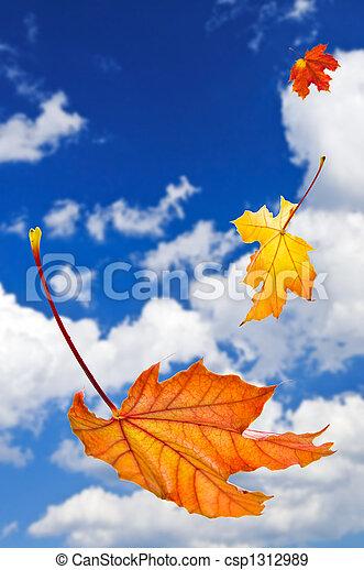folhas, maple, fundo, outono - csp1312989