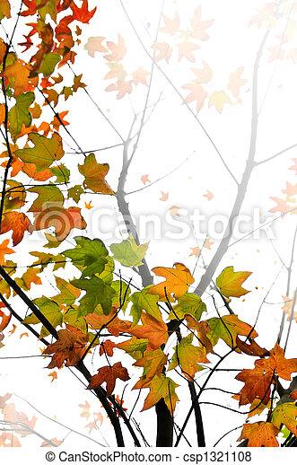 folhas, maple, fundo, outono - csp1321108
