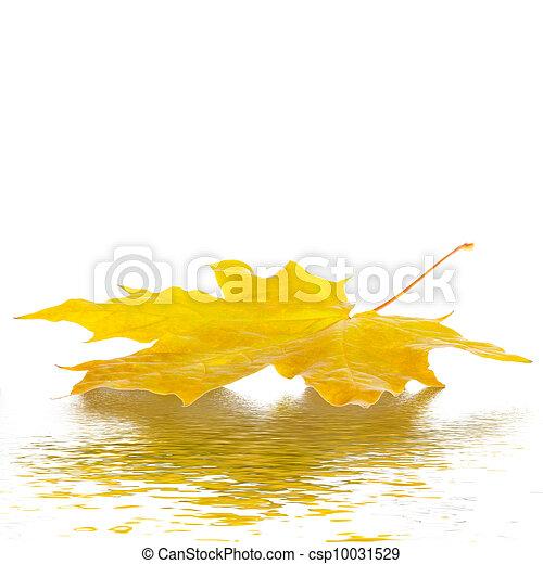 folhas, maple, outono - csp10031529