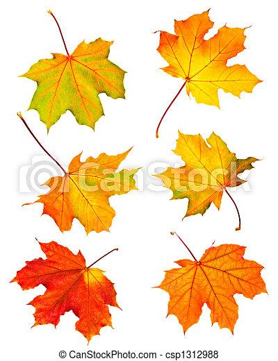 folhas, maple, outono - csp1312988