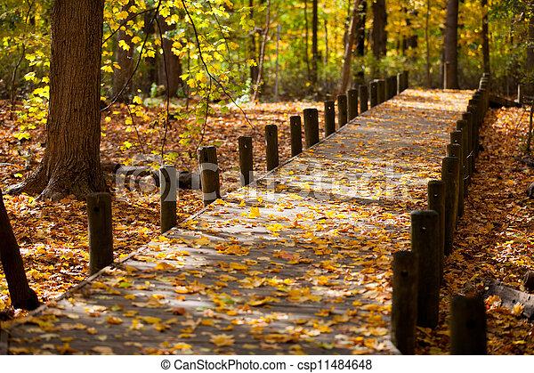 folhas, maple, passagem - csp11484648