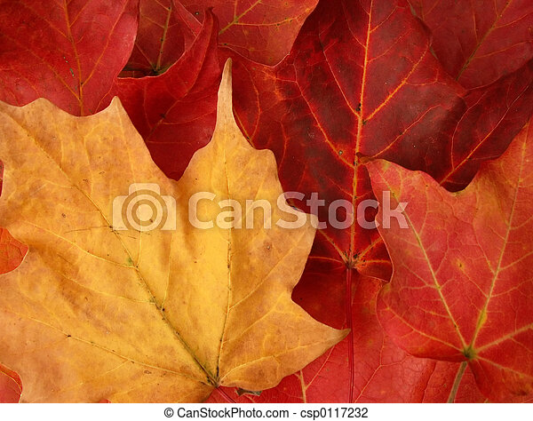 folhas, outono - csp0117232