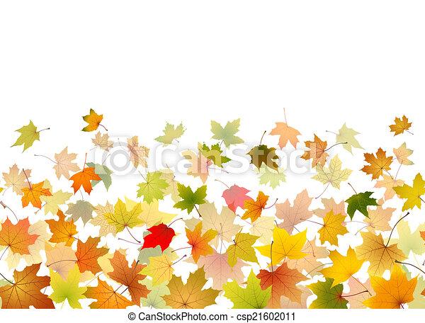 folhas, queda, maple - csp21602011