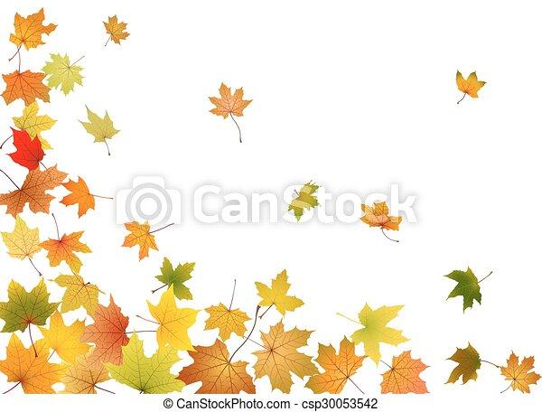 folhas, queda, maple - csp30053542