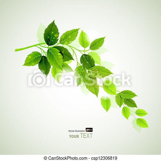 folhas, verão, verde - csp12306819