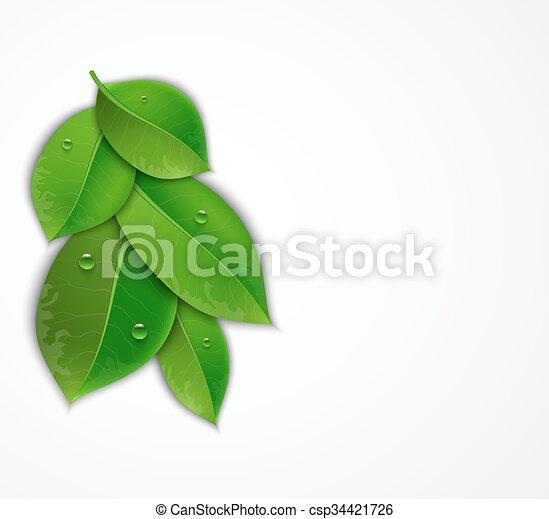 folhas, verde branco, fundo - csp34421726