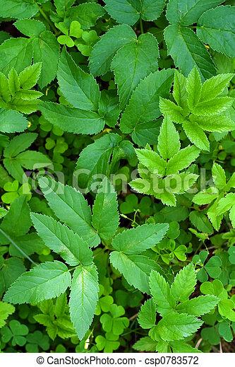 foliage, fundo - csp0783572