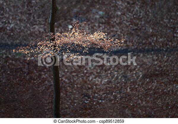 foliage in autumn in the sun - csp89512859