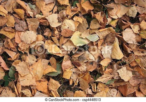 Foliage in the autumn - csp4448513