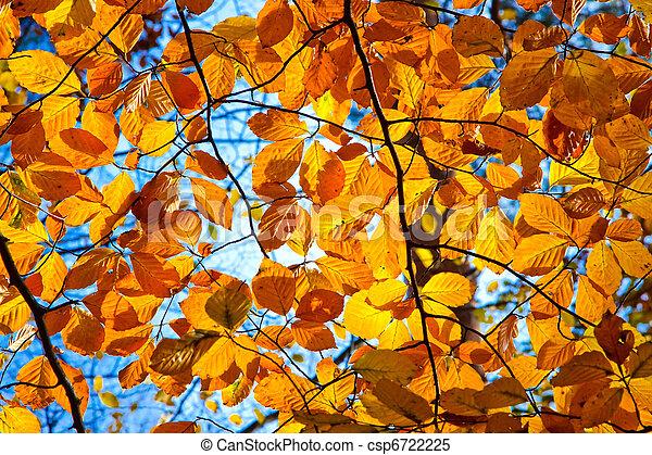 follaje de otoño - csp6722225