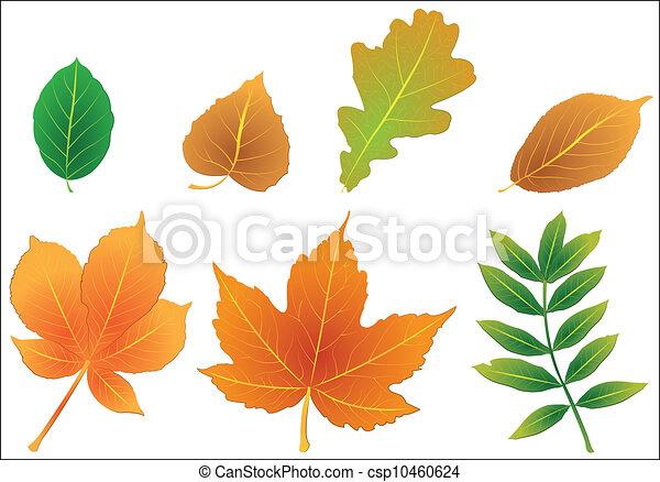 Foliage - csp10460624