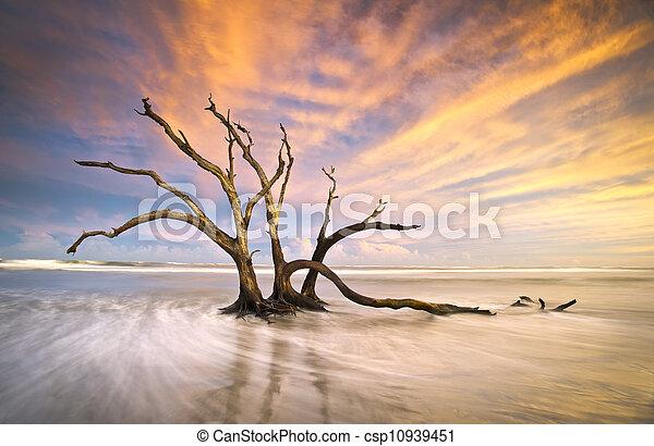 Folly Beach Dead Tree Driftwood Ocean Sunset Charleston SC Landscape scene in South Carolina - csp10939451