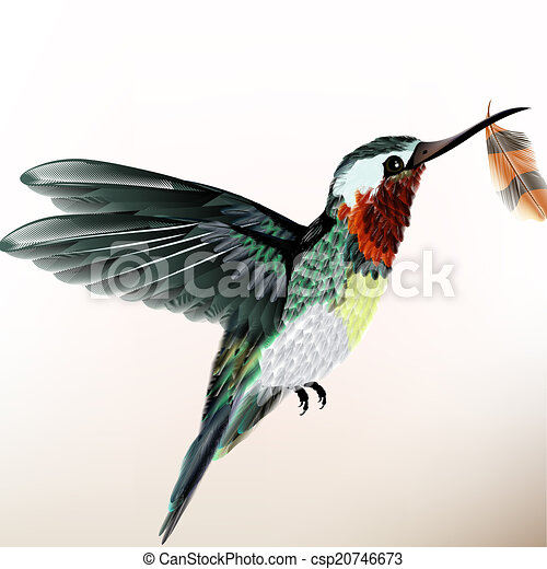 Fond Colore Colibri Illustration Realiste Vecteur Conception