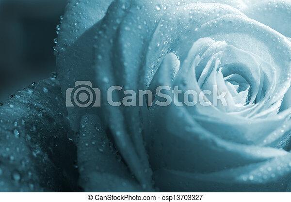 fond, rose - csp13703327