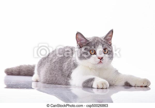Gatito en un fondo blanco - csp50026863