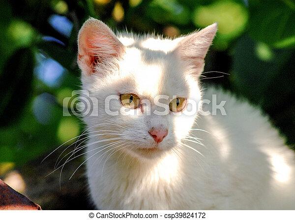 Gatito en un fondo blanco - csp39824172