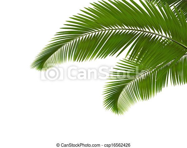 Fondo., hojas, palma, blanco, vector.