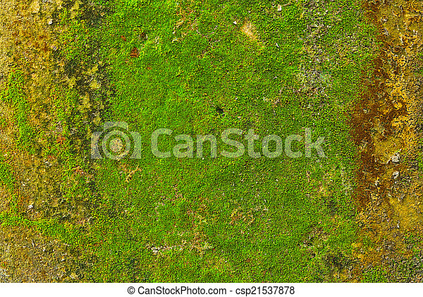 Moss en el fondo de textura de la pared. - csp21537878