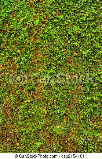 Moss en el fondo de textura de la pared. - csp21541011