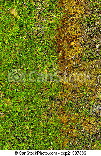 Moss en el fondo de textura de la pared. - csp21537883