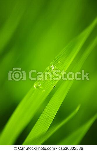 Antecedentes de hierba. - csp36802536