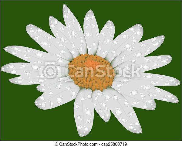 Daisy en un fondo verde - csp25800719