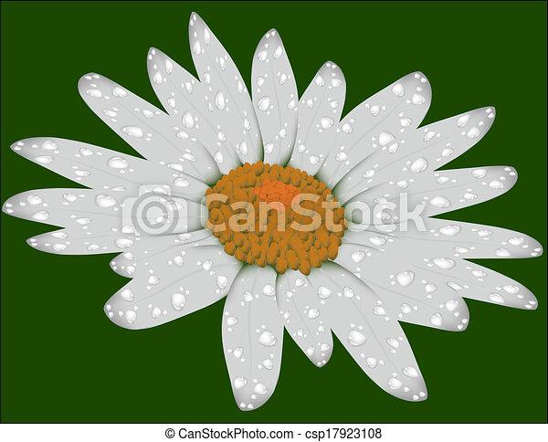 Daisy en un fondo verde - csp17923108