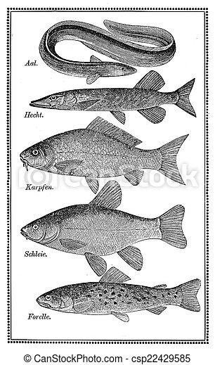 Food, old fish chart - csp22429585