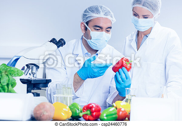 Food scientists looking at a pepper - csp24460776
