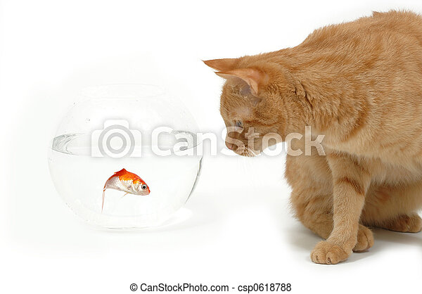 Foodchain Cat Is Lokking At A Fish In A Bowl Note The Fish Is