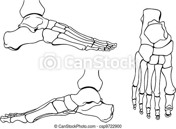 Foot bones - csp9722900