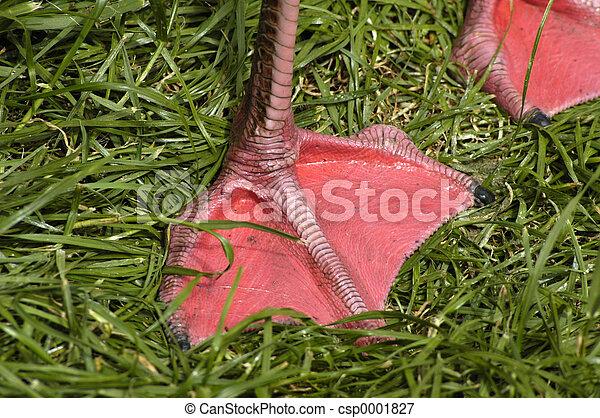 foot of the flamingo - csp0001827