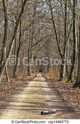 Footpath in a Forest - csp14484770