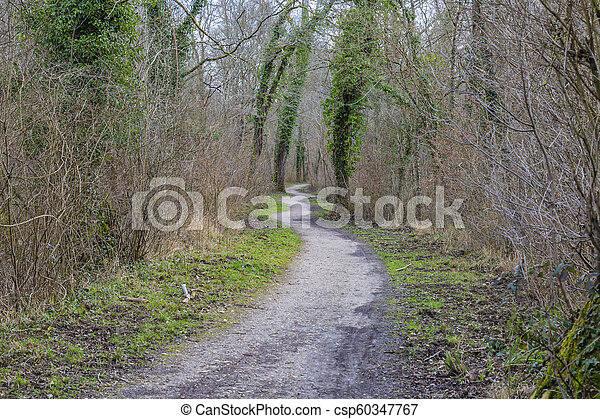 Footpath in a Forest - csp60347767