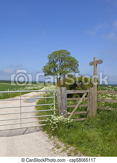 footpath sign and ash mature tree in summertime - csp58065117