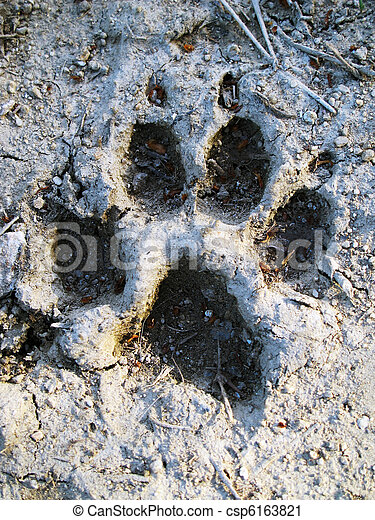 Footprint of wolf - csp6163821