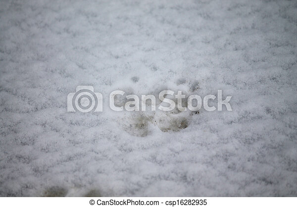 footprint on snow - csp16282935