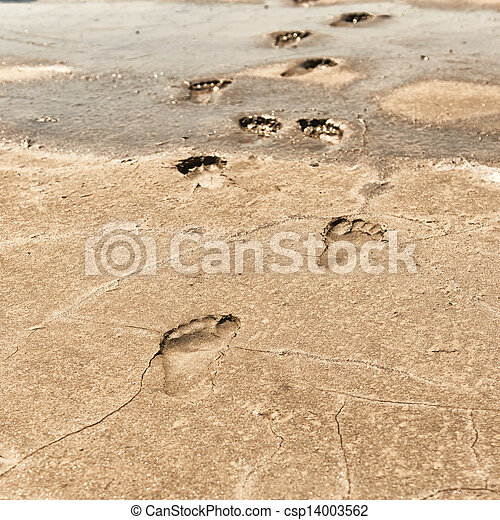footprints in the sand on a beach - csp14003562