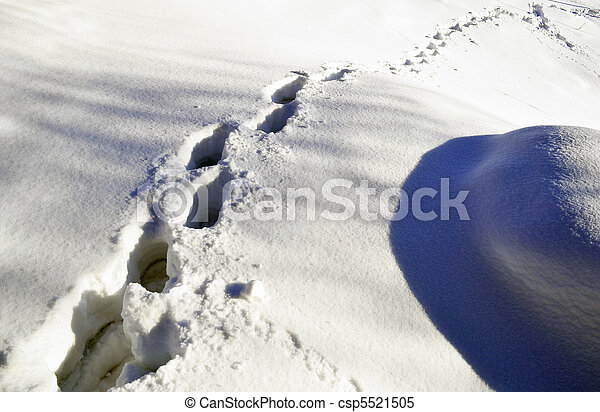 footprints in the snow - csp5521505