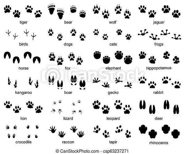 footprints of wild animals - csp63237271
