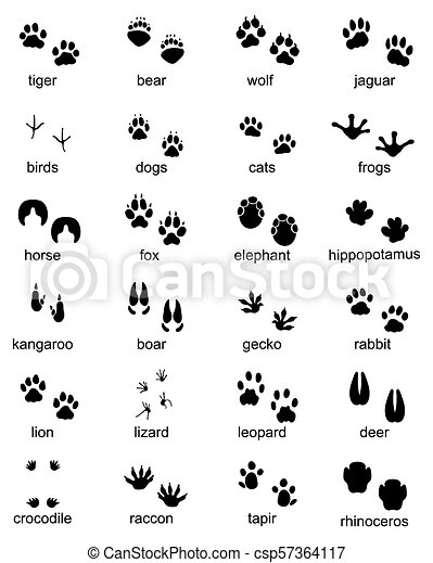 footprints of wild animals - csp57364117