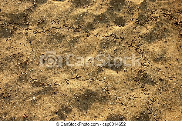 footprints! - csp0014652