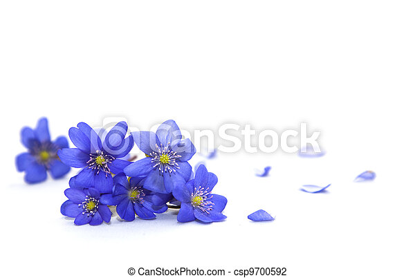 forår, flowers. - csp9700592