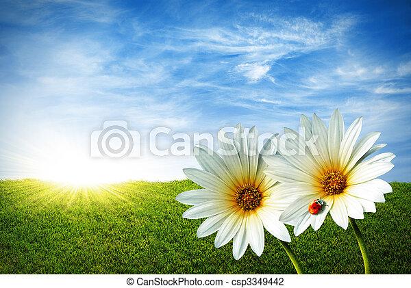 forår - csp3349442