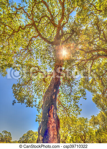 forêt, arbres, bouchon - csp39710322