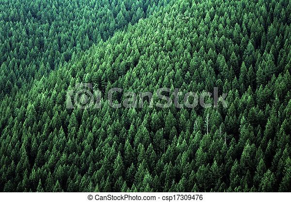 forêt, arbres pin - csp17309476