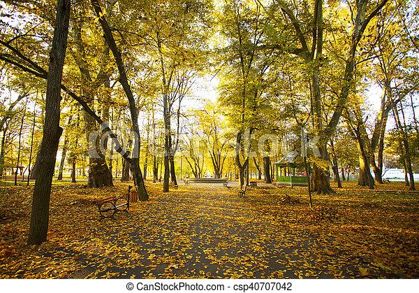 forêt automne, chemin - csp40707042